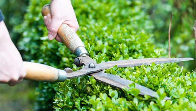 Trồng và chăm sóc cây xanh